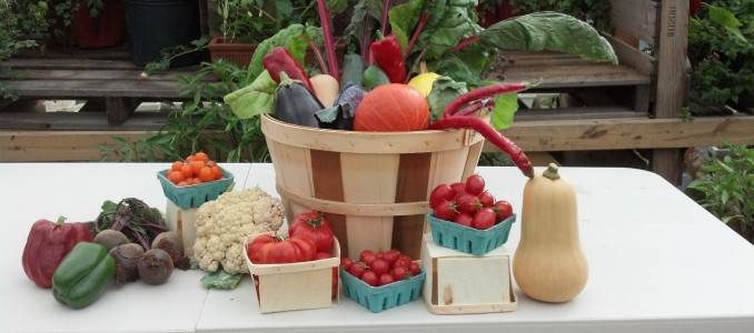 2016 CSA's Available– We are offering CSA deliveries to specified locations. We areplanting and have CSA Shares available this year. […]